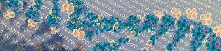 DNA-Reparatur gegen Krebs und Altern – Spektrum der Wissenschaft