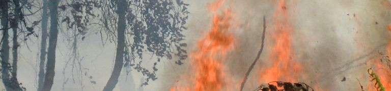 Indonesien brennt nicht wegen El Niño – Fischblog